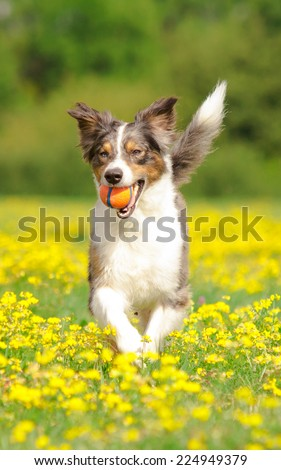Playing Dog - stock photo