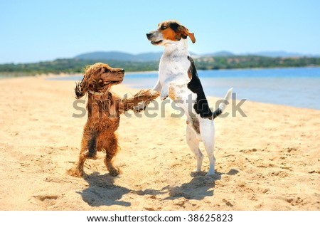 playing dogs on the beach - stock photo