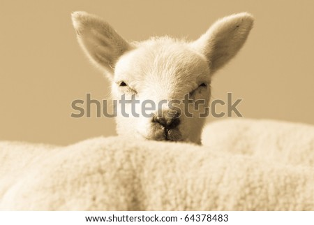 Playing hide and seek - stock photo