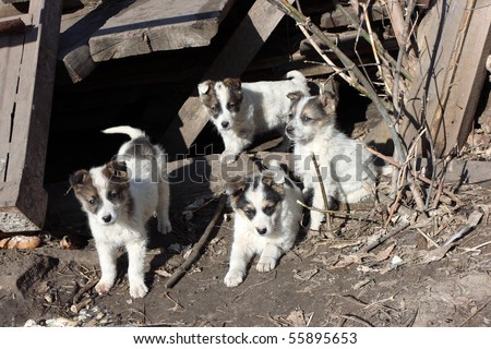 Playing homeless puppies - stock photo