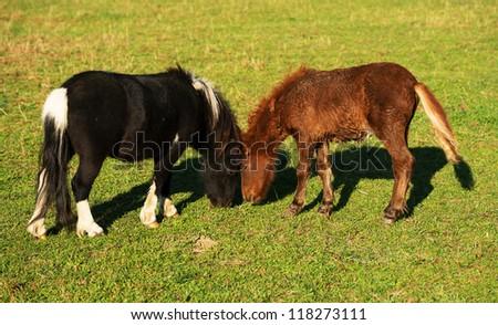 Playing horses - stock photo