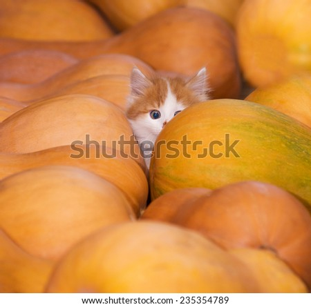playing with a cat - stock photo