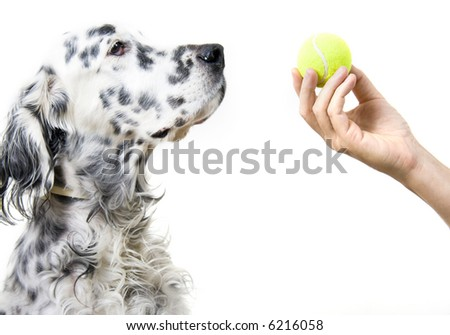 Playing with dog - stock photo