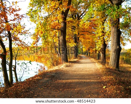 pleasant autumn walk in the pond among the leafy trees - stock photo
