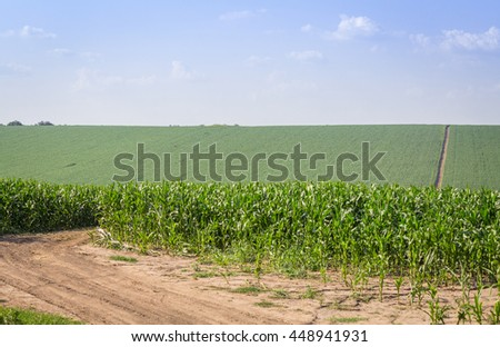 Pleated agricultural land with harvest of corn against the blue sky with white clouds - stock photo