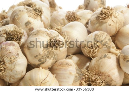 plenty of garlic fresh from the field