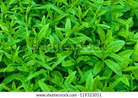 Plenty of wet leaves - stock photo