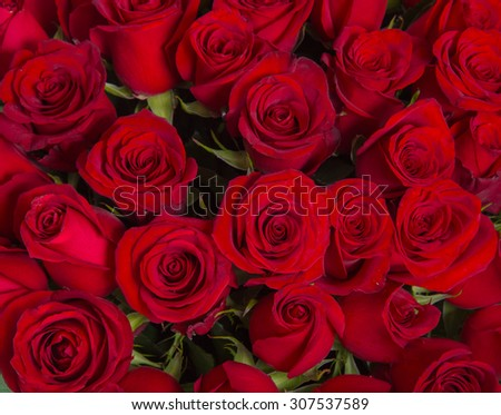 Plenty red natural roses background. - stock photo