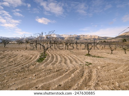 Ploughed field, rural landscape with almond trees in winter, snow in Sierra de Maria in the background - stock photo