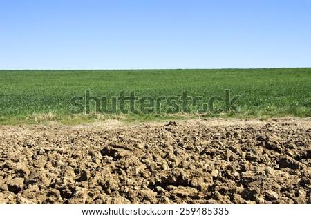 plowed and green field ,Alentejo,Portugal - stock photo