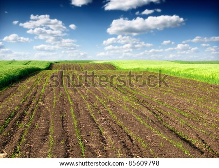 plowed field and green wheat - stock photo