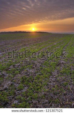 Plowed field at sunset - stock photo