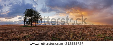 Plowed field Panorama with tree at sunset - stock photo