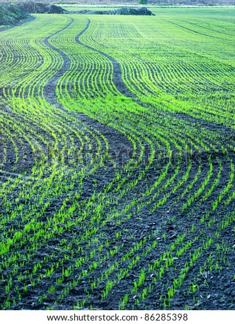 Plowed field with small green plants in curved pattern - stock photo