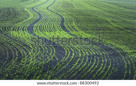 Plowed field with small green plants in regular patterns - stock photo