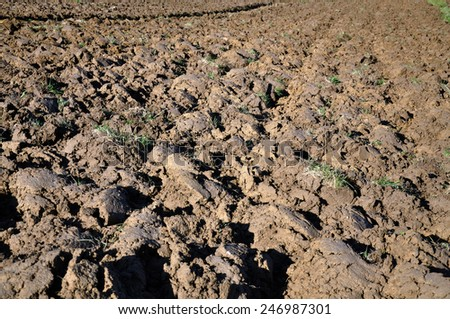 Plowing cultivated fresh brown semi-clay earth - stock photo