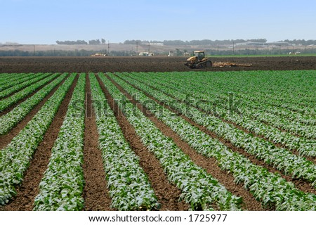 Plowing The Fields - stock photo