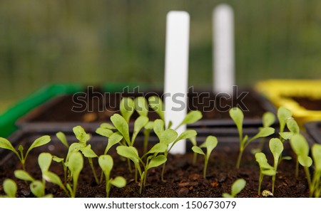 Plug-label shell in sowing - stock photo
