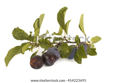 plum and leafs - stock photo