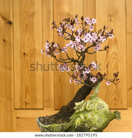plum blossom bonsai potted handmade - stock photo