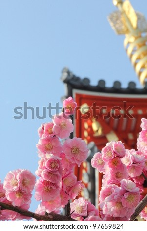 Plum blossom in Japanese temple,low angle view. - stock photo