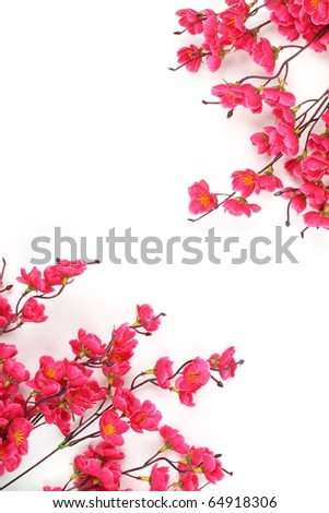 Plum Blossom Isolated on White Background - stock photo