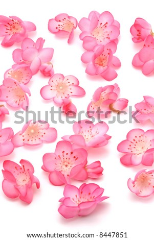 Plum blossoms on white background for Chinese New Year - stock photo
