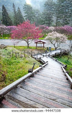 Plum flowers blossoming tree in garden - stock photo