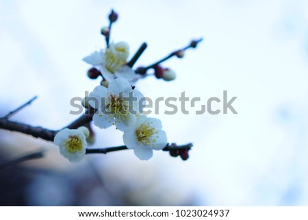 https://thumb7.shutterstock.com/display_pic_with_logo/167494286/1023024937/stock-photo-plum-in-a-shrine-1023024937.jpg
