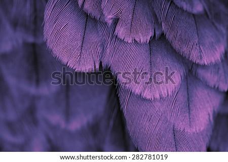 plumage background of bird close up - stock photo