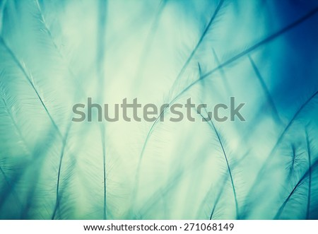 plumage background of bird closeup - stock photo