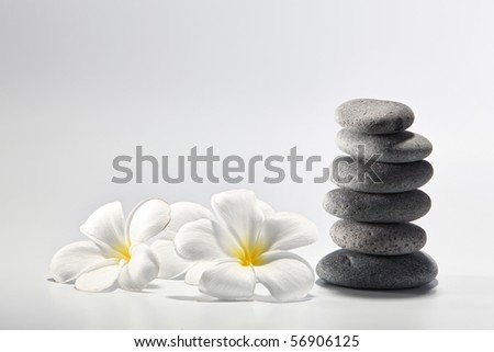 plumeria flower by the side of the stone
