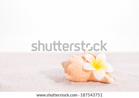 Plumeria flower in a conch shell on sand close up - stock photo