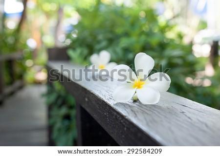 Plumeria Flower on wood ,Defocused tropical flowers frangipani on wood - stock photo