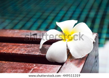 plumeria flower on wooden chair in swimming pool