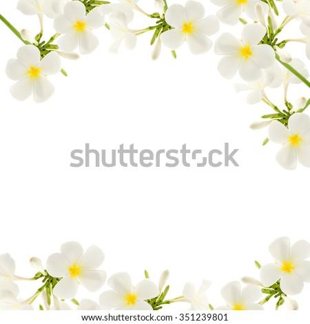 Plumeria flowers frame isolated on white stock photo edit now plumeria flowers frame isolated on white background mightylinksfo