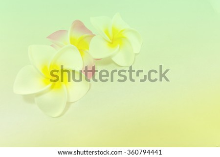 Plumeria flowers  in soft color, Made with blur style for background - stock photo