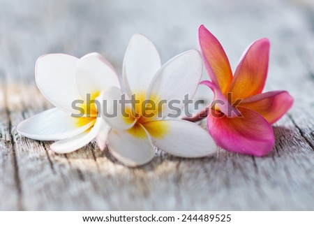plumeria flowers on a wooden background - stock photo