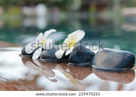 Plumeria Flowers on Row of Stones at Edge of Pool in Peaceful Spa Setting - stock photo
