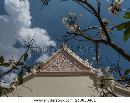 Plumeria flowers or templetree in Buddhist temple