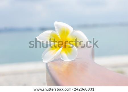 Plumeria flowers, white flowers on background. - stock photo