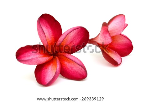 Arrangement From Hibiscus Flowers Plumeria Rubra Isolated On White Background