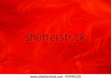 plumes red - stock photo