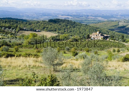 Plump Italian olive tree landscape 33. See more in my portfolio - stock photo