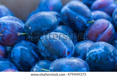 Plums background. Beautiful blue plums in close up - background of fresh fruits.