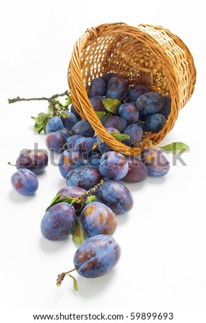 Plums. Fresh picked plums scattered from wicker basket isolated on white background - stock photo