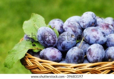 plums in the basket - stock photo