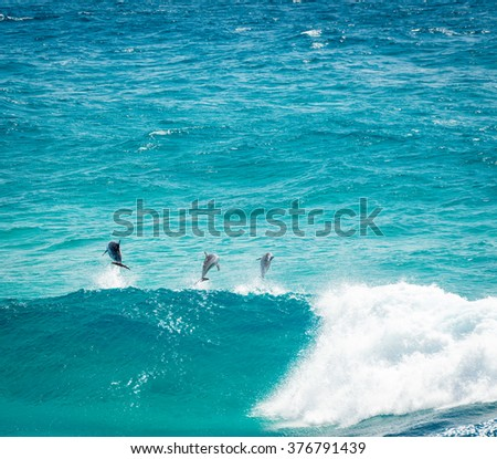Pod of Dolphins playing and jumping in the waves off Stradbroke Island, Queensland, Australia - stock photo