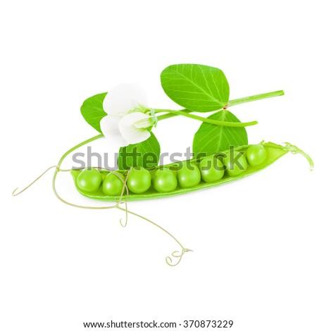 Pod of green peas  - stock photo