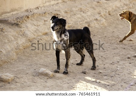 Podenco dog running in natural park, domestic animals and sport